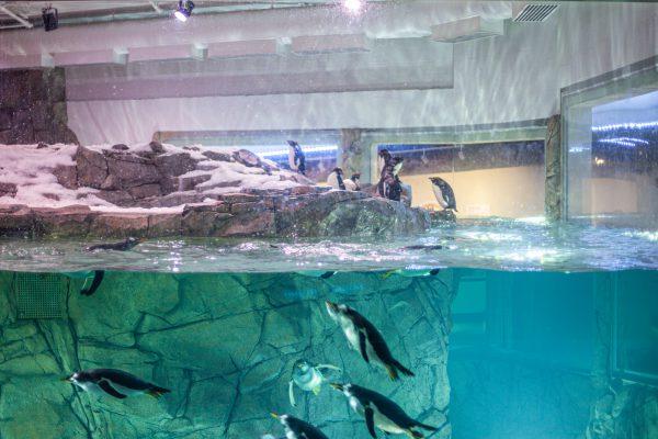 penguin-chill_alvine-2