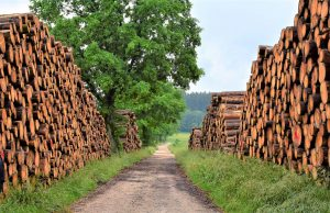 Piles of harvested timber